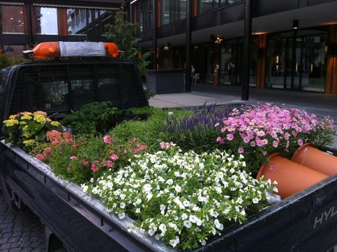 Planter og planting